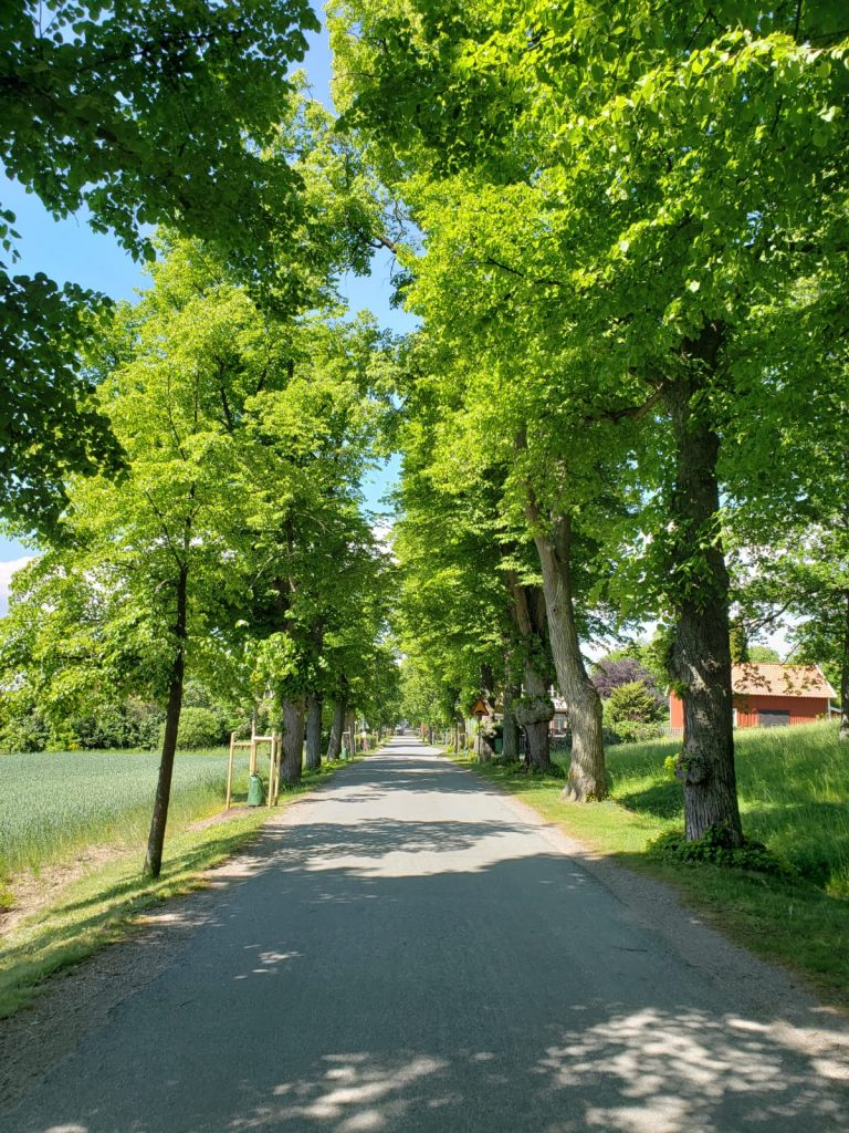 Drottningholm has a forest which is convenient from Stockholm